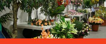 Loja de flores e jardim